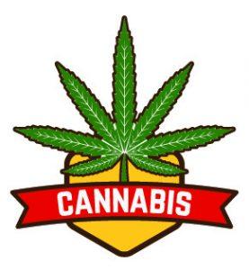 Consult a marijuana attorney